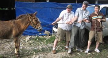 donkey-photo