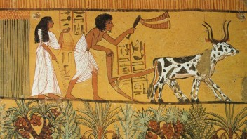 egyptian-agriculture