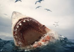 Köpekbalığına karşı drone koruması