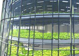 Bu robot bina 5 bin insanı besleyecek