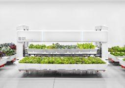 Yapay zekalı tarlanın sebzeleri satışa çıktı