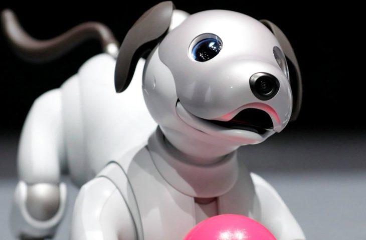 Sony robot köpek