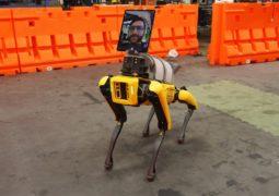 Köpek robot Spot uzaktan tedavide kullanılıyor