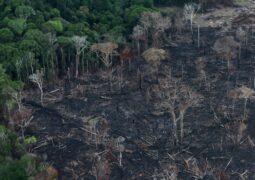 Amazon Ormanları algoritmalarla korunacak