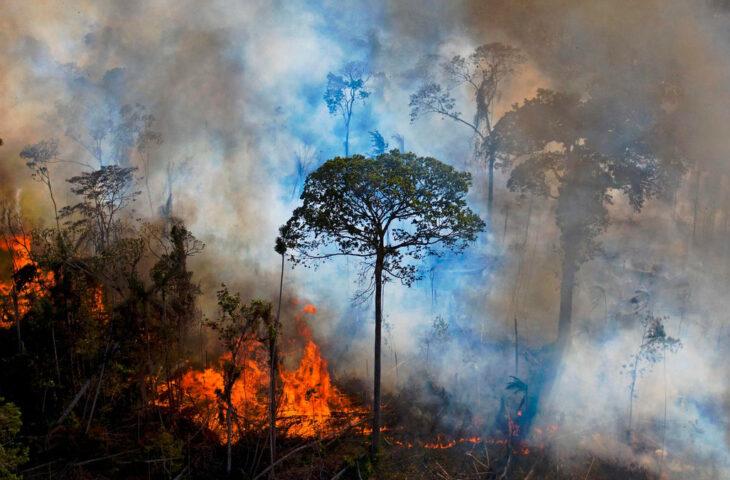 Amazon Ormanları Facebook