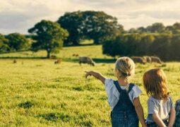 Çiftçilerin sosyal ağı Wefarm